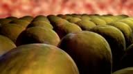 field of fat cells video