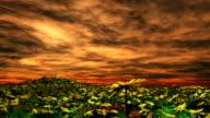 Field of Flower - Orange sky video