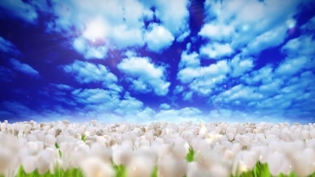 Field of flowers video