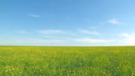 field of green grass and yellow flowers video