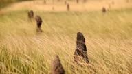 field of termite hill. video