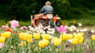 Field of Tulips with Tractor. Overcast day video