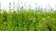 Field of wild flowers video