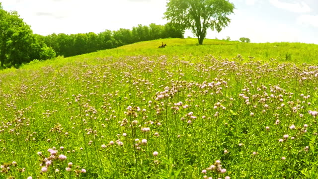 Field of wildflowers video