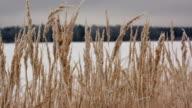 Field of winter wheat video