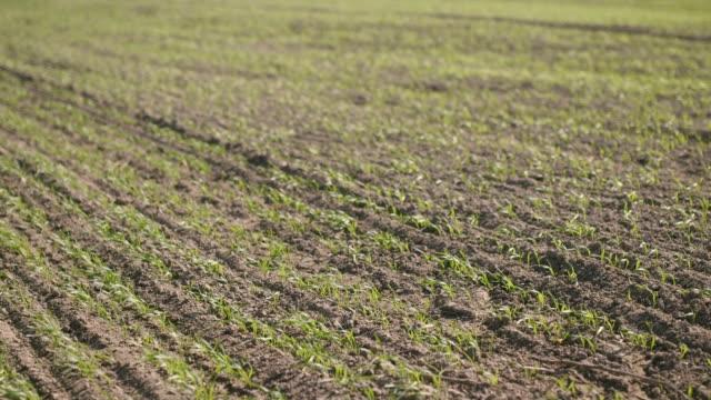 field shoot, farm, landscape video