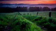 CRANE UP: Field Sunrise video