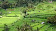 field terraces close to mount Agung, Bali video