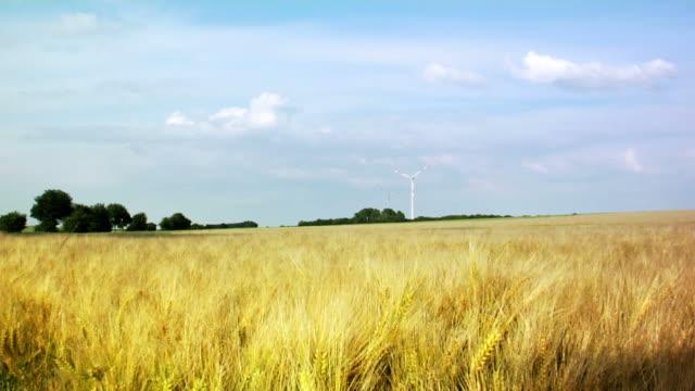 Field (HD1080) video