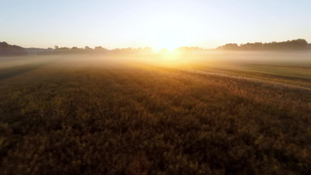 AERIAL Fields Covered With Morning Mist video