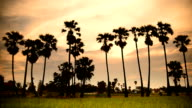 Fields in the evening in thailand video