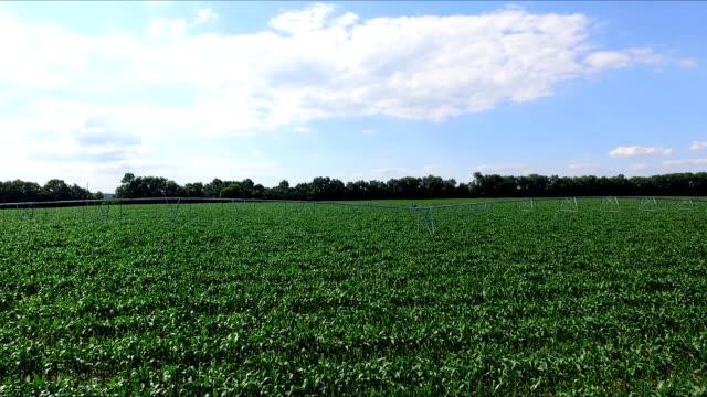 fields irrigation system in summer aero video