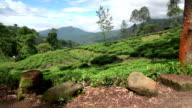 Fields of Nuwara Eliya video