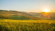 T/L Fields of wheat in the Tuscany region video