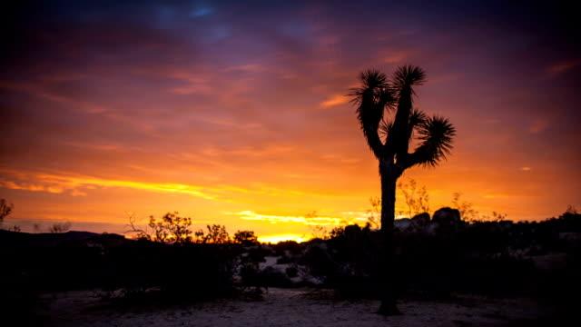 Fiery Joshua Tree Sunset - Time Lapse video