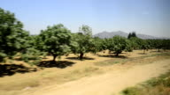 Fig orchard in Turkey seen from a train trip video