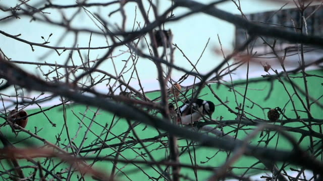 Fine Woodpecker Ate His Breakfast video