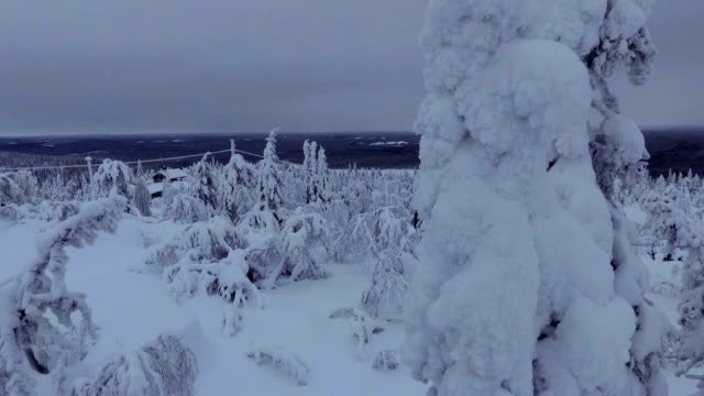 Finnish Lapland aerial footage - heavy snow forest video