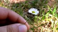 fiore raccolto video
