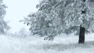 fir tree in snow wild forest Christmas winter branch snowing video