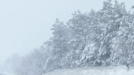 fir trees in snow wild winter forest snowing Christmas video