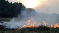 Fire and thick smoke in forest, wildfire. Burning dry grass, meadow, woods. Nature disaster, dramatic drought, threat of great fire. Against sky and sun, sunset video