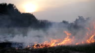 Fire and thick smoke in forest, wildfire, bushfire. Burning dry grass, meadow, field. Disaster, dramatic drought, threat of great fire. Against sky and sun, sunset video