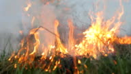 Fire forest meadow, wildfire, bushfire. Close up burning dry and green grass, bright flame, smoke. Natural disaster, threat of great fire video