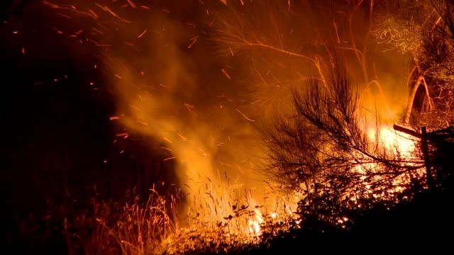 Fire in the bush video