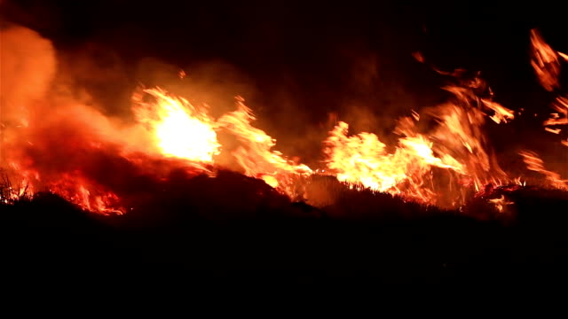 Fire in the Cornfield After Harvest. Burning Biomass. video