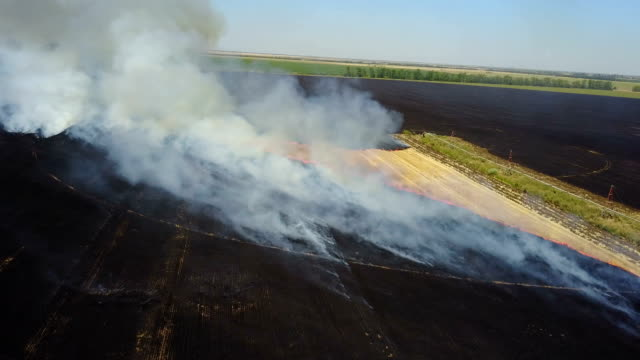 Fire in the field with stubble video