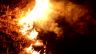 Fire in the forest at night video