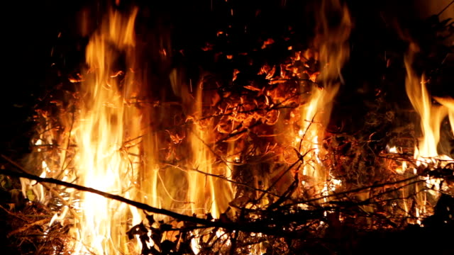 Fire in the forest dry branches video