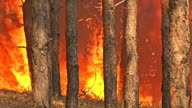 Fire storm in the mountain forest, fire destroys thousands of acres of trees video