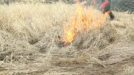 Firefighter Using a Drip Torch to Ignite Dried Grass video