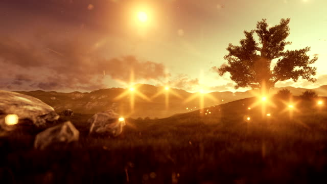 Fireflies over green meadow and tree of life at golden hour video