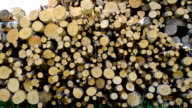 Firewood in the yard. video