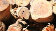 Firewood video