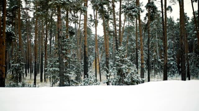 First autumn snowfall. video