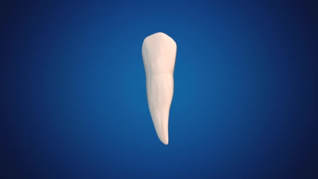 First Premolar/Bicuspid video