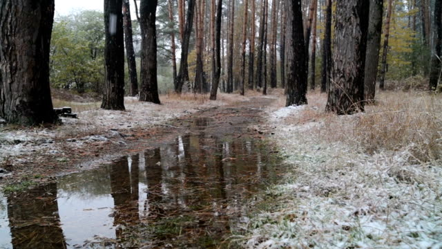 First snow in the forest. Road with puddles. video