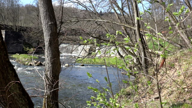 First spring green leaves on twigs and waterfall water flow. FullHD video