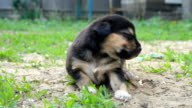 first unsteady walk of a small puppy after birth video