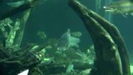 fisches in aquarium video