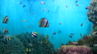 Fish and coral. video