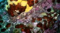 Fish and sea urchins among the rocks on seabed. video