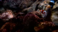 fish brine in tank video