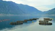 Fish farm for salmon growing in open sea water video