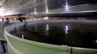 Fish farm video
