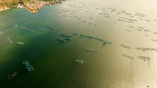Fish farming in lake Taal. Luzon, Philippines video